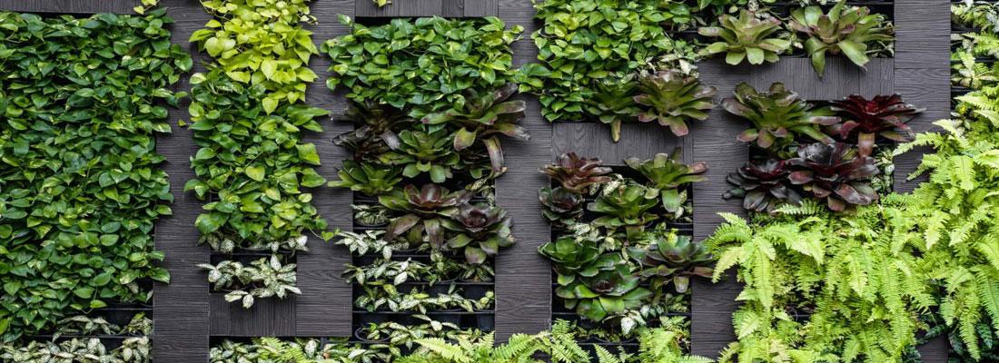 décorer son intérieur avec des plantes vertes