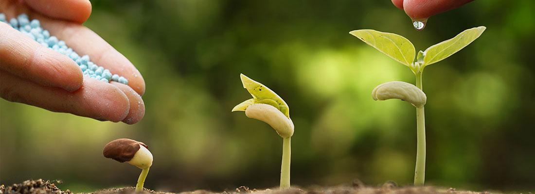 parcours des plantes